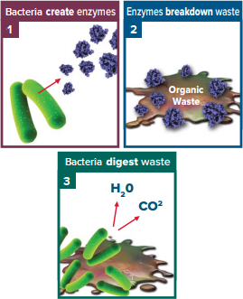 bacteria enzymes waste